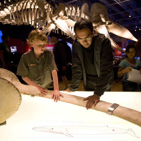 California Life Shows You the Many Things to Explore at the California Academy of Sciences