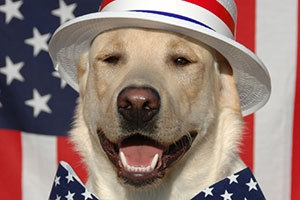 Protect Your Pets on the 4th of July!