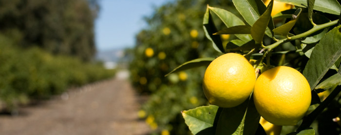 Limoneira Ranch, Napa's first winery & Children's Miracle Network this week on California Life