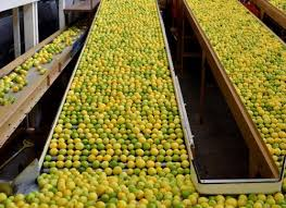 When life hands you lemons… it's likely they came from here