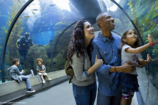 Why you need to take a trip to the California Academy of Sciences!