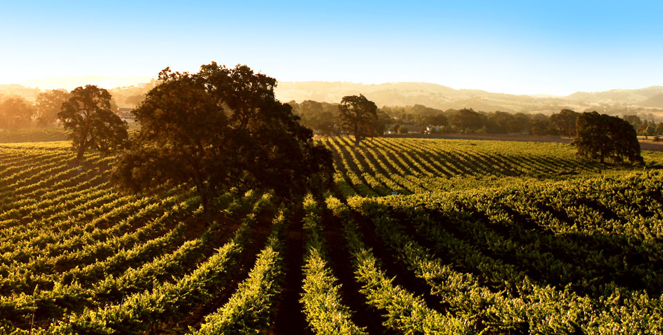 This week on California Life, wine at Allegretto Vineyard Resort in Paso Robles, dine at Marugame Udon and more!