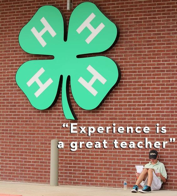 4H Programs Inspire Creativity and Love of Learning