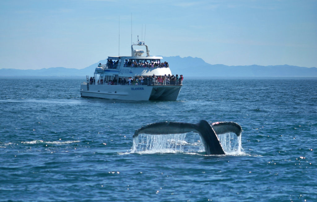 Whale Watching Season Begins in Oxnard!
