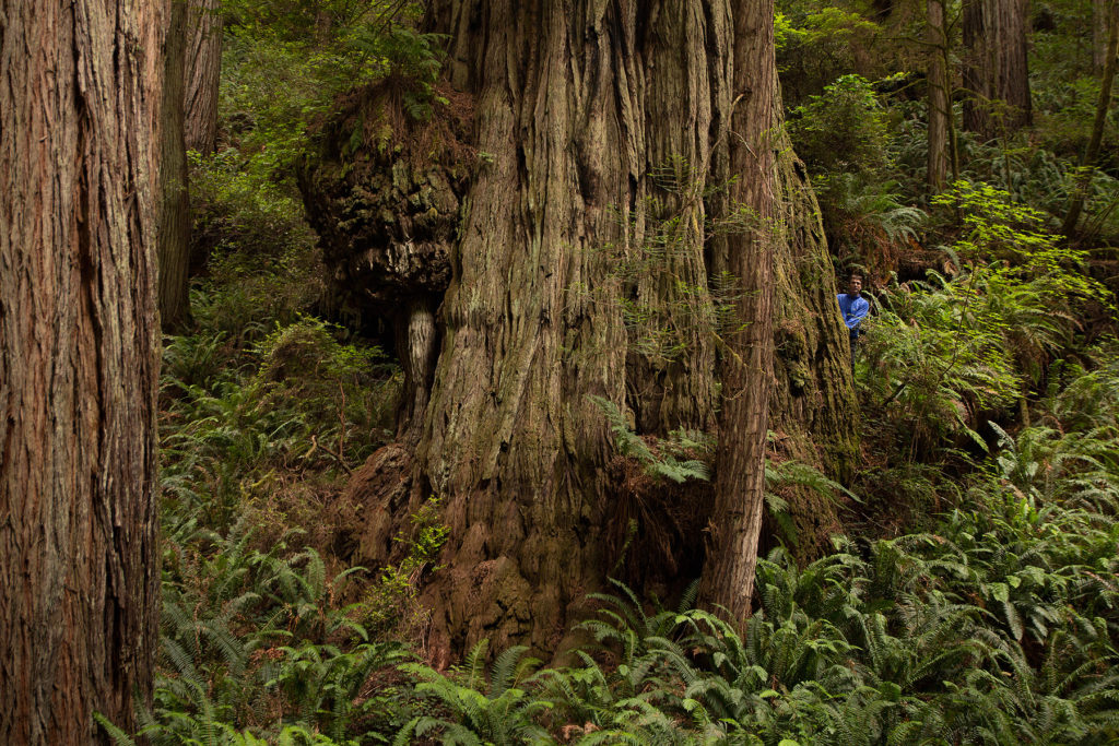 Adventure Group Announces Top Redwood Trees