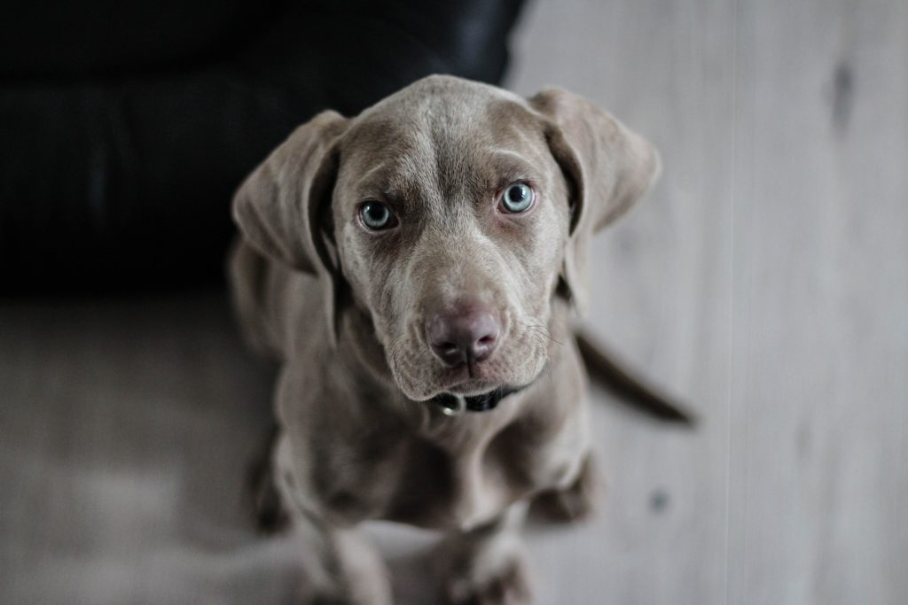 Top 10 puppy names for 2020 – Celebrating Puppies on National Puppy Day