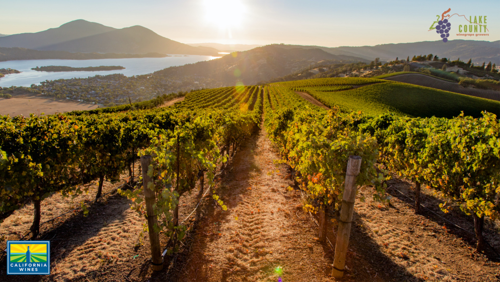 Take a Virtual Trip to California Wine Country with Zoom Backgrounds