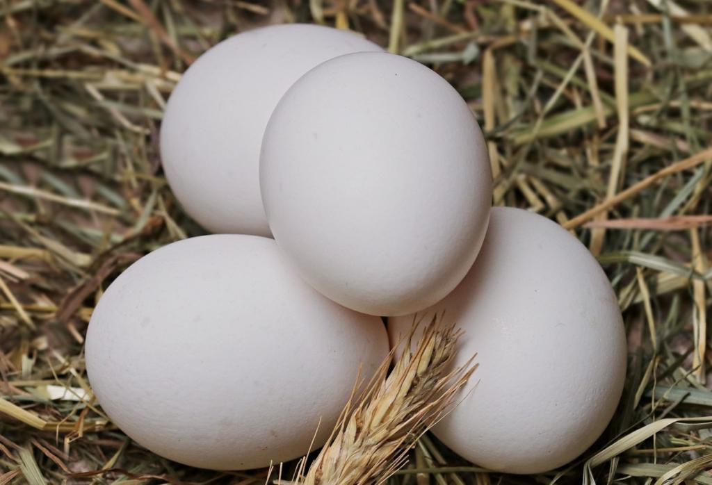 Science is Amazing: Egg-Based Coating to Preserve Fresh Produce