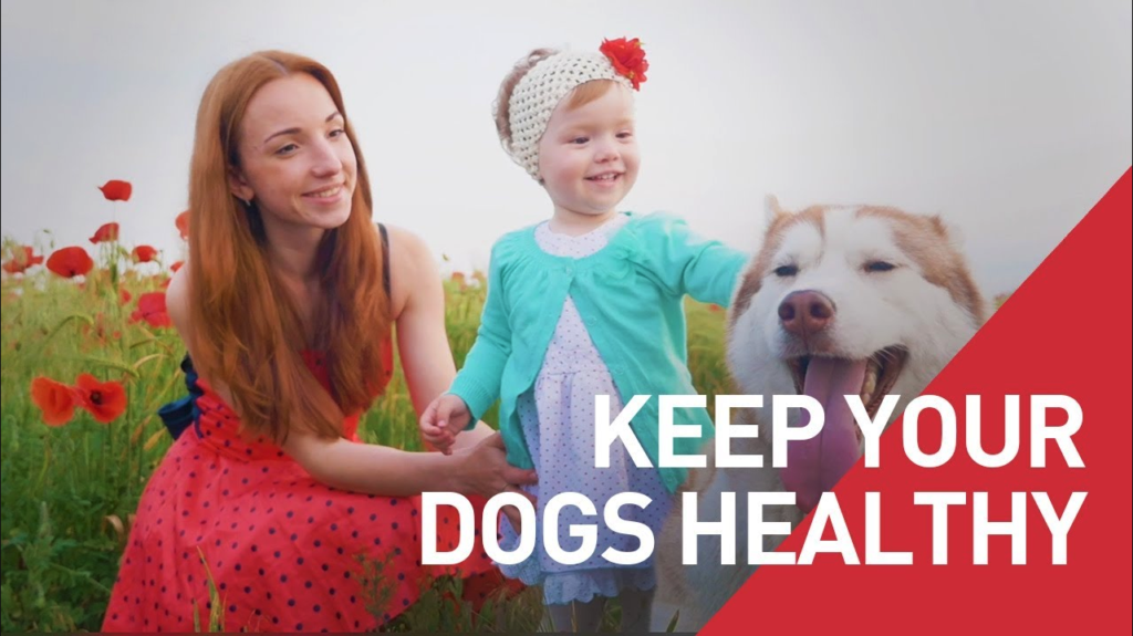 Keep Your Dogs Healthy and Support World-Class Dogs