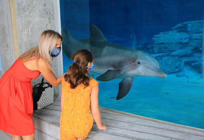 Clearwater Marine Aquarium Unveils Winter the Dolphin's New Home