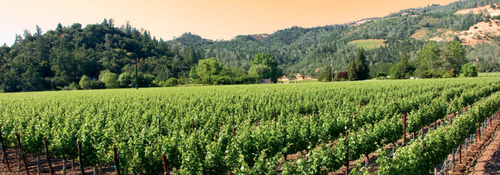 California Life Shows You How Paso Robles is Making a Name for Itself Among Foodies