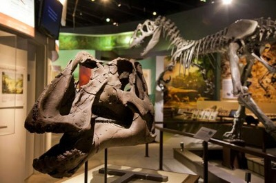 """Dinosaurs in Claremont? The museum that'll make you feel like you're in """"Jurassic World""""!"""