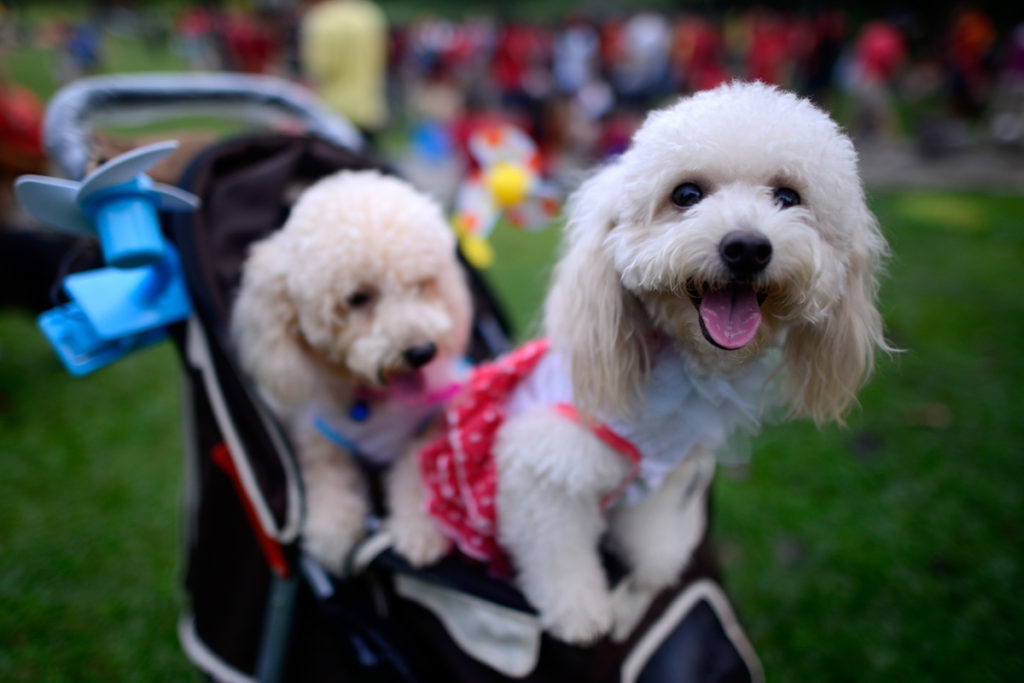 Treat your pup to the Dog Days of Summer event in Encinitas, California