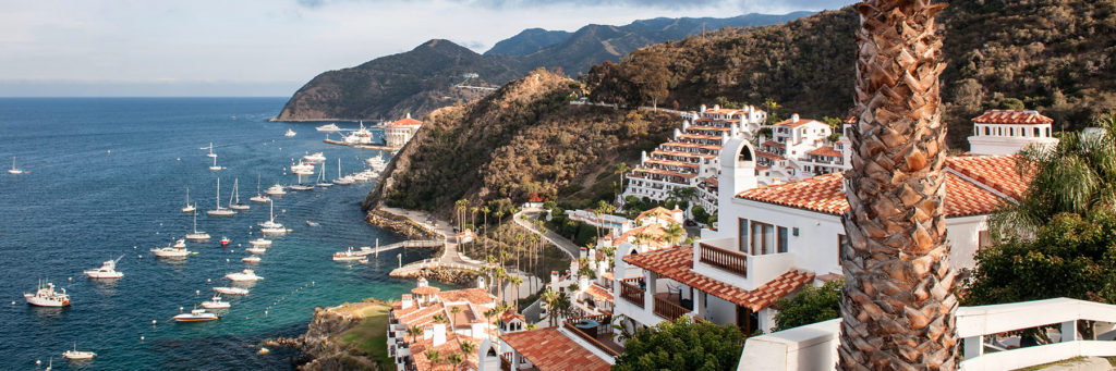 Catalina Island, the best of bikinis and what every pet owner should know – all on this week's episode of California Life!