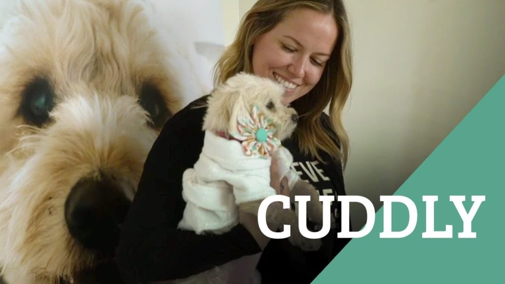 Cuddly is Creating a Community of Animal Lovers, Around the World
