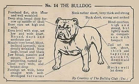 Bulldogs are one of the most popular breeds in America, and there's a club dedicated just for them!