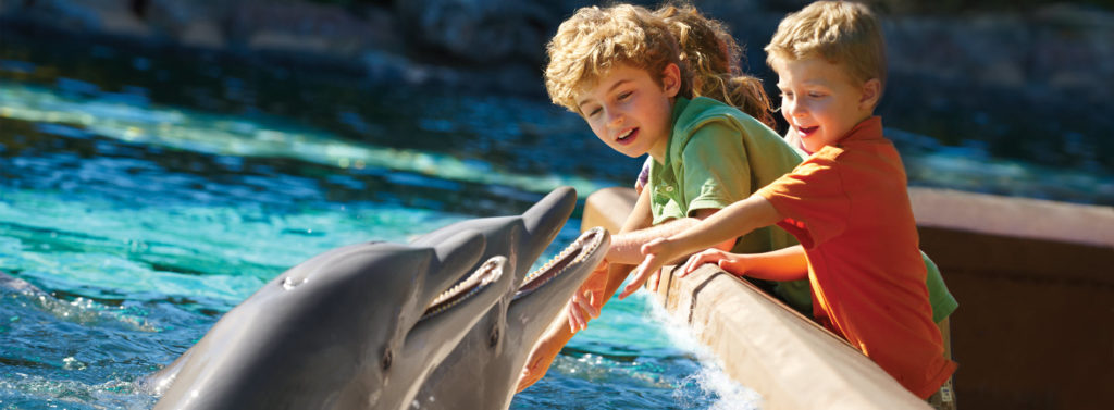 Attention Dolphin Lovers! The SeaWorld Dolphin Encounter is Calling