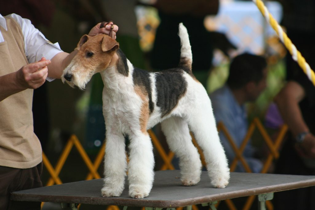 2020 BEVERLY HILLS DOG SHOW PRESENTED BY PURINA TO AIR ON SUNDAY, MAY 17