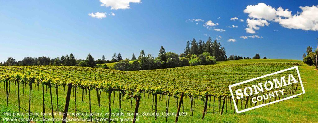 Sonoma County Tourism launches globally-inspired message of solidarity