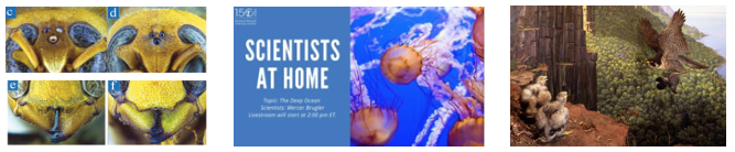 THIS WEEK FROM THE AMERICAN MUSEUM OF NATURAL HISTORY: DEEP-SEA SCIENTIST AT HOME, NEW RESEARCH ON ID'ING INVASIVE HORNETS, DINOSAUR DRAWING CHALLENGE FOR KIDS, AND MORE!