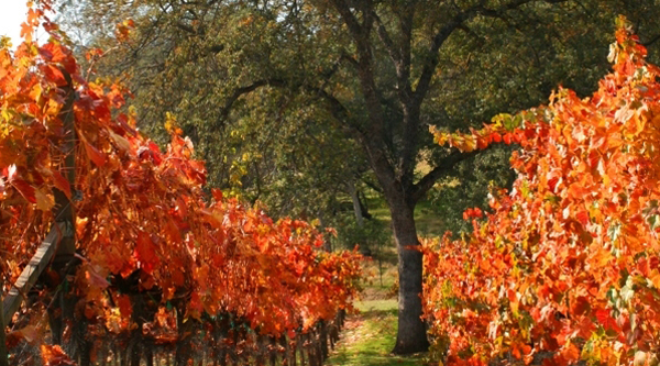 Madera County Wineries Receive High Recognition from Sunset International Wine Competition, and Others