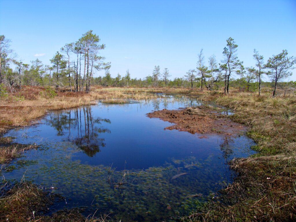Lithuanian Natural Splendor: 4 Untouched National Reserves