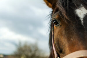 An Eye Opening Memoir About A Life in Horse Racing and Rescue