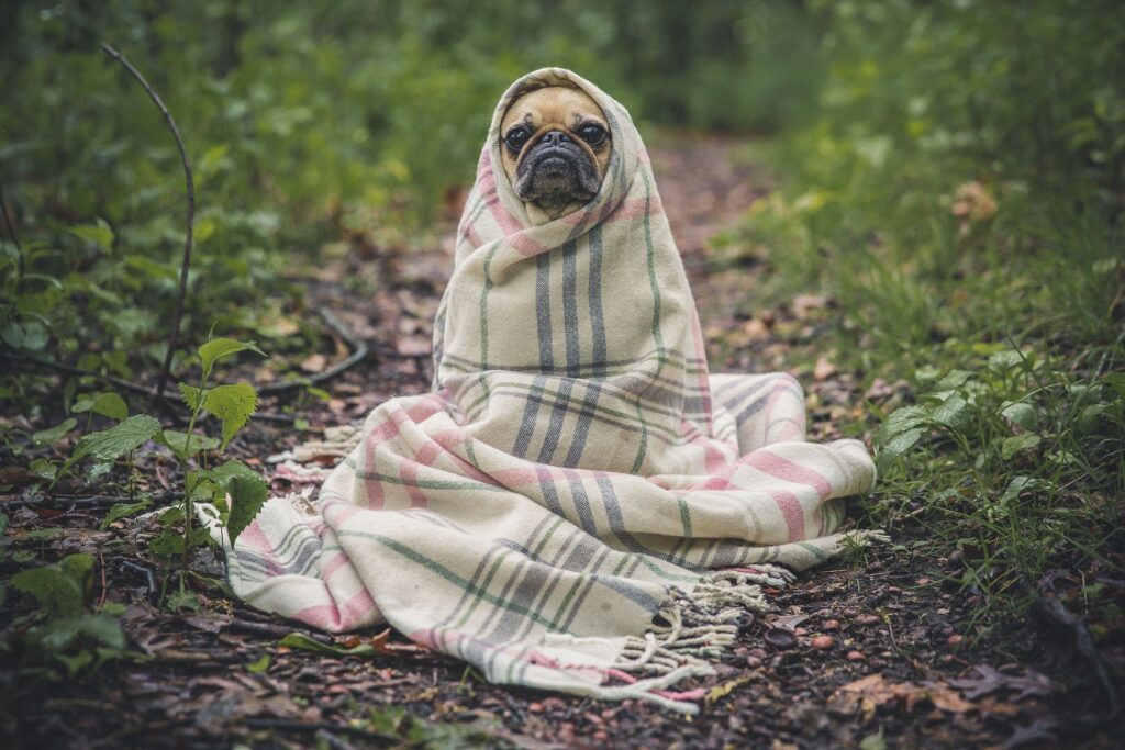 Patpat Introduces Hooded Raincoats for Your Furry Friends