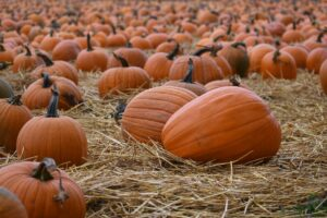 Visit These Pumpkin Patches Around Springfield, Missouri