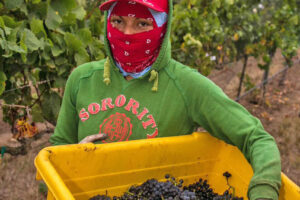 Challenging 2020 Harvest Season Will Yield High Quality California Wines