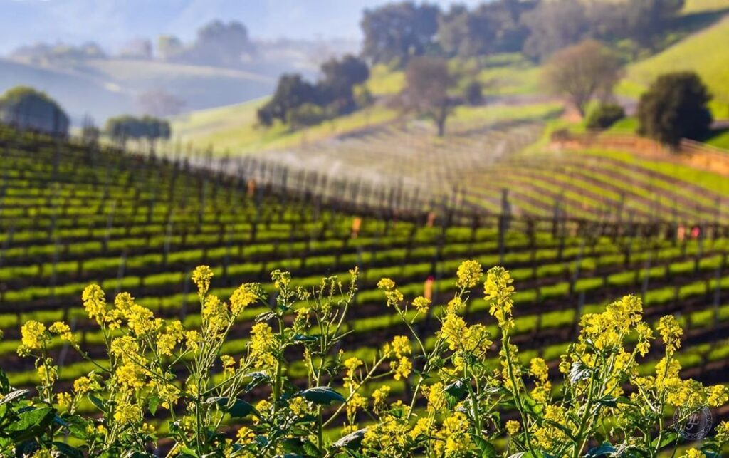 THE SANTA YNEZ VALLEY INVITES VISITORS TO TURN THE PAGE ON 2020 As harvest season offers wine and culinary immersion, this fall and winter in the Santa Ynez Valley will be a truly peaceful experience
