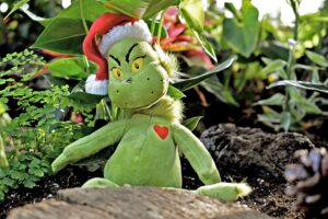 THE GRINCH'S GROTTO – Tickets On-Sale Now!