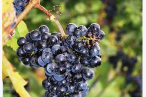 2021's Best California Wine Counties