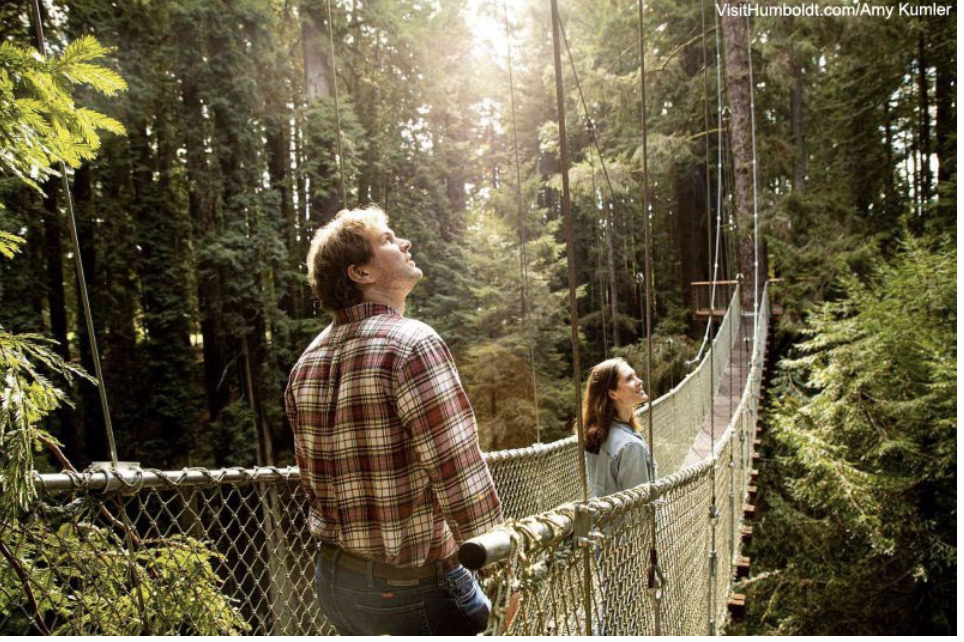 Go on California's new forest sky trail. Get a free redwood to plant at home